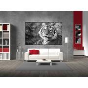 Tablou canvas tigru alb negru - cod G09