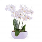 Interflora Centro de Plantas de Phalaenopsis Brancas