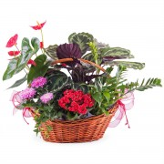 Centro de plantas Premium - Flores a Domicilio