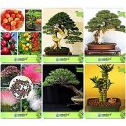 Bonsai Suitable Seeds : Seed For Home Garden Combo Apple Pinus Petula Thuja Orientalis Albizia Lebbeck Eucalyptus Bamboo Garden Seeds Pack By Creativefarmer
