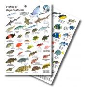 Fishes of Baja California