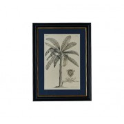 G&C Rowan Palm tavla 42x59