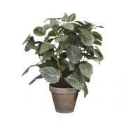 Planta artificiala in ghiveci, Fittonia, H35 x D25, verde