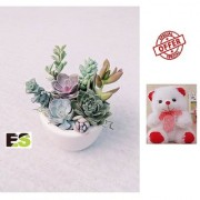 SECCULENT ES LIVE MINI DECORATIVE PLANT WITH FREE COMBO GIFT - 6 inchTEDDYBEAR