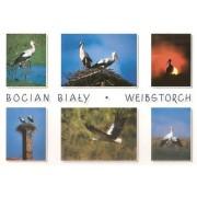 Bociany - widokówka (13031)