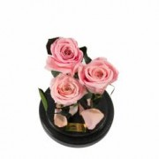Aranjament 3 Trandafiri Criogenati Roz Queen Roses in cupola de sticla