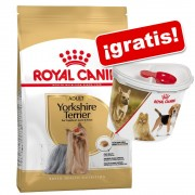 Royal Canin Breed 3 a 4,5 kg + Contenedor de pienso Royal Canin ¡gratis! - Chihuahua 28 Adult (3 x 1,5 kg)
