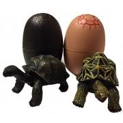 Turtle figure 2 body a pair star tortoise, Aldabra giant tortoise prefabricated egg Cased