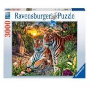 Пъзел Ravensburger 3000 елемента, Тигри, 7017072