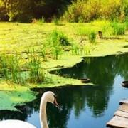 LG Electronics LCD monitor LG Electronics 32MP58HQ-P, 80 cm (31.5 palec),1920 x 1080 px 5 ms, IPS LCD zásuvka sluchátek, VGA, HDMI™