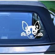 Chihuahua autómatrica