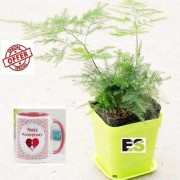 ES SITAWAR GREEN LIVE PLANT With Gift Anniversary Gift Mug