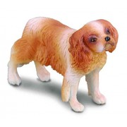 Collect A Cavalier King Charles Spaniel