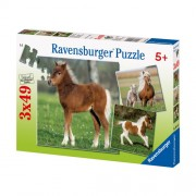 Puzzle ponei, 3x49 piese, RAVENSBURGER