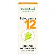 PlantExtrakt Polygemma Nr. 12 Rinichi Detoxifiere