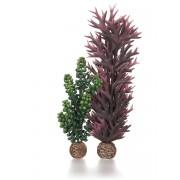 biOrb rostlina mořská perla