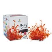 Magical Crystal Growing Kit Ruby Red W T Samuel Treasure