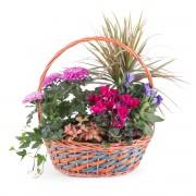 Cesta de Plantas - Equinoccio - Flores a Domicilio