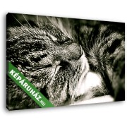 Cirmos cica alszik (40x25 cm, Vászonkép )