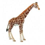 Figurina girafa mascul