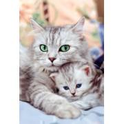 Puzzle Pisică cu pisicuţă Educa cu 500 de piese 13758 colorat