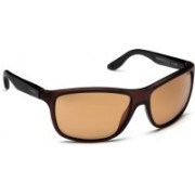 Carrera Round Sunglasses(Brown)