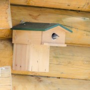 Vivara Nestkast Spreeuw met balkon 45 mm