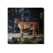 Tablou Canvas Beautiful Tiger