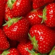 Căpșuni Elsanta (la ghiveci)