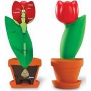 Model de sectiune a florii