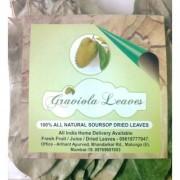 Graviola leaves soursop hanuman laxman phal shadow dried Natural forest leaves cancer immunity diabetes (200 leaves)