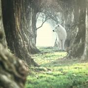 Wolf of Wilderness ração para cães 12 kg + Wolf of Wilderness snacks Wolfshappen grátis! - Junior Wild Hills com frango