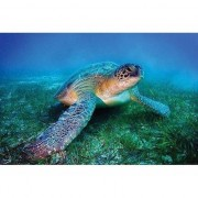 Geen Poster zeeschildpad 61 x 92 cm - Action products