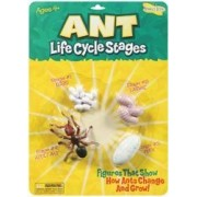Bulk Buy: Insect Lore Life Cycle Stages Ant (3-Pack)