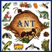 The Life and Times of the Ant, Paperback