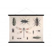 HKLiving Canvas schoolplaat insecten XL Naturel