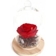 Aranjament floral cu trandafir criogenat rosu vibrant in cupola de sticla cadou pentru femei