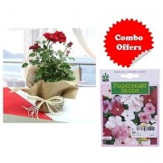 ES Gift Red Rose Plant with Indica Hybrid Seeds