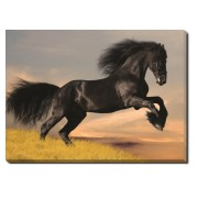 Tablou Canvas Black Beauty