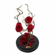 Aranjament 5 Trandafiri Criogenati Rosii Queen Roses in cupola de sticla
