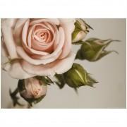 Fototapet trandafir roz vintage AG Design