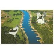 Wrona siwa - widokówka