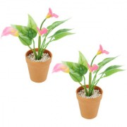 Wonderland Calla Lily with Plastic pot (Set of 2)