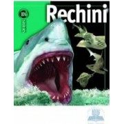 Rechini - Insiders