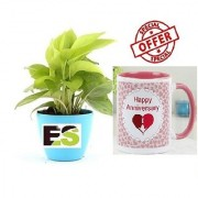 ES LUCKY MONEY PLANT FANCY POT COMBO With Gift Anniversary Gift Mug