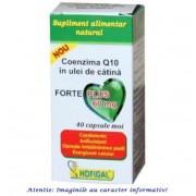 Coenzima Q10 in Ulei de Catina Forte Plus 60 mg 40 capsule Hofigal