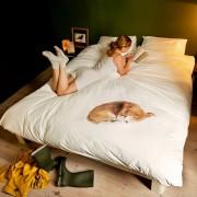 Snurk Bob dekbedovertrek Snurk-2-persoons 240 x 220 cm incl. 2 kussenslopen 60 x 70 cm
