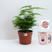 ES Asparagus Natural Live Plant With Gift Anniversary Gift Mug