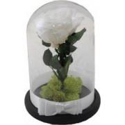 Trandafir criogenat in cupola MagazinulCuPlante.ro 21 cm Alb