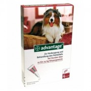 Advantage 250 Cão 10 a 25Kg - 4 Pipetas - Bayer